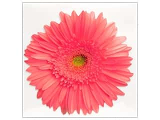 Note Cards & Envelopes: Paper House Diecut Card Gerber Daisy Pink