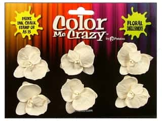 Clearance Petaloo Color Me Crazy: Petaloo Color Me Crazy Orchid Dendrobiums Medium